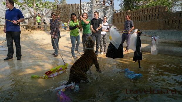 Тигриный храм. Взрослые играют