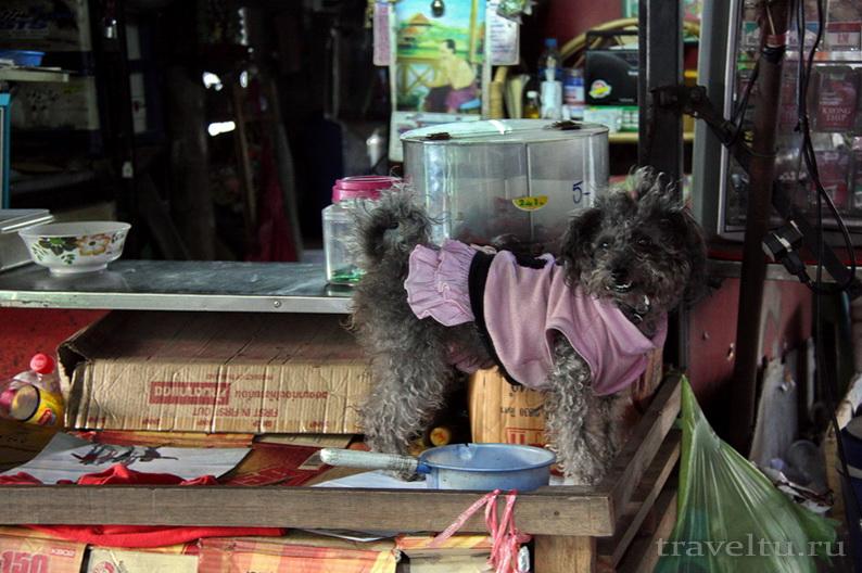 Каналы Бангкока. Собака на остановке