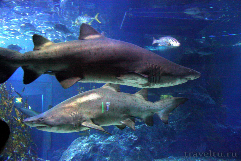 Океанариум Siam Ocean World в Бангкоке. Акулы