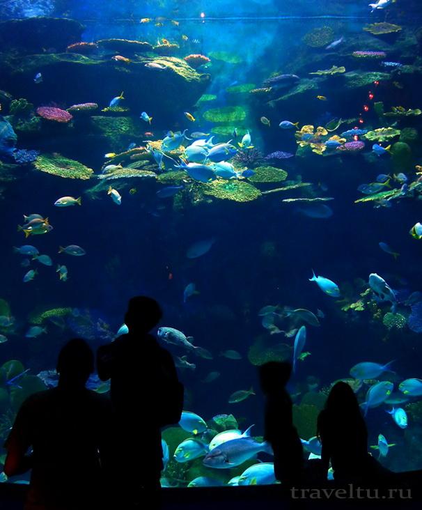 Океанариум Siam Ocean World в Бангкоке. Аквариум