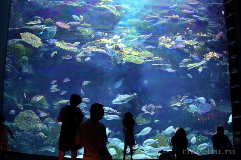 Океанариум Siam Ocean World в Бангкоке. Большой аквариум