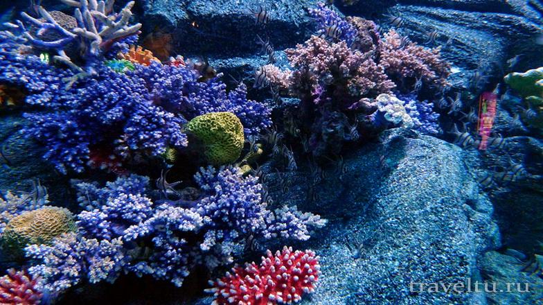 Океанариум Siam Ocean World в Бангкоке. Кораллы