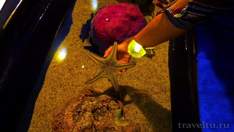 Океанариум Siam Ocean World в Бангкоке. Морская звезда