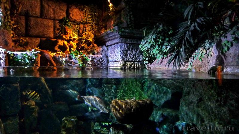 Океанариум Siam Ocean World в Бангкоке. Пруд