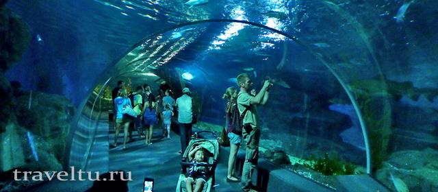 Океанариум Siam Ocean World в Бангкоке. Туннель 2