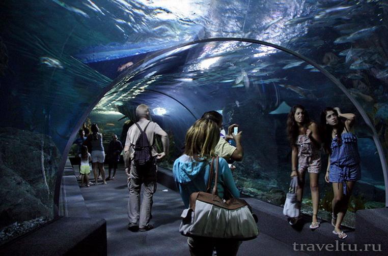 Океанариум Siam Ocean World в Бангкоке. Туннель