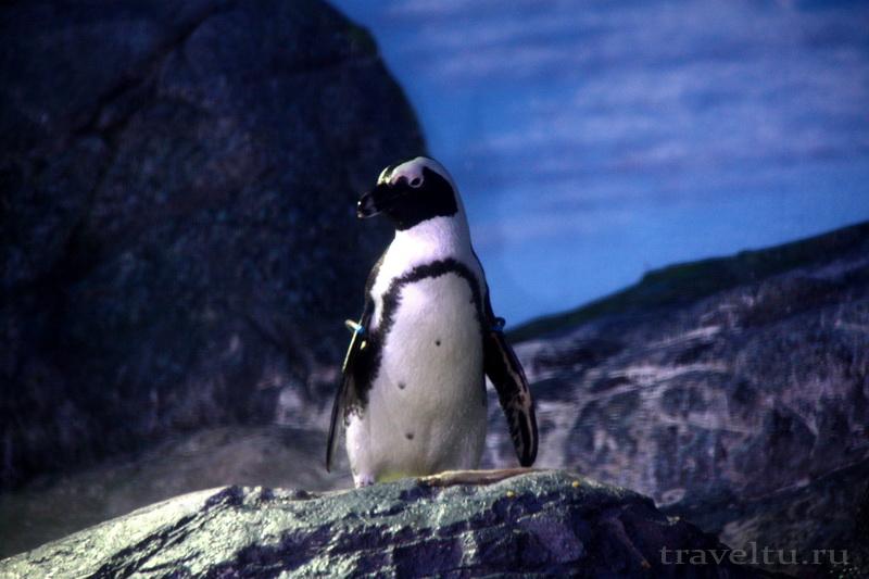 Океанариум Siam Ocean World в Бангкоке.Пингвин