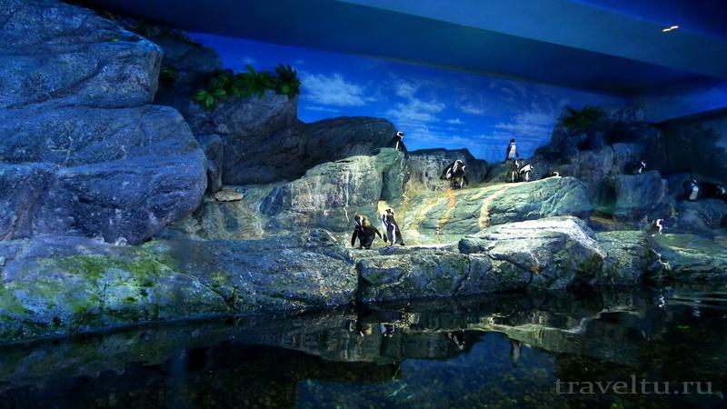 Океанариум Siam Ocean World в Бангкоке.Пингвины