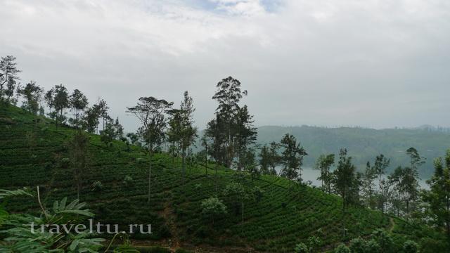 Шри-Ланка. Отзыв туристов. Чайные плантации