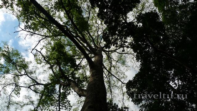 Шри-Ланка. Отзыв туристов. Королевский ботанический сад