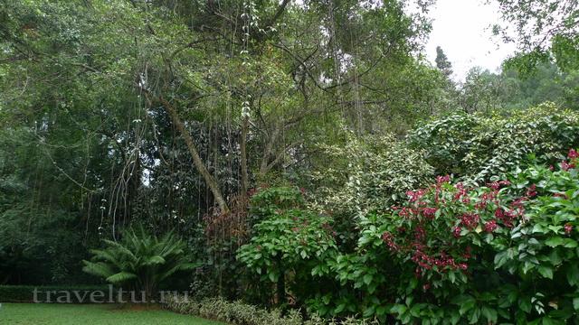 Шри-Ланка. Дерево