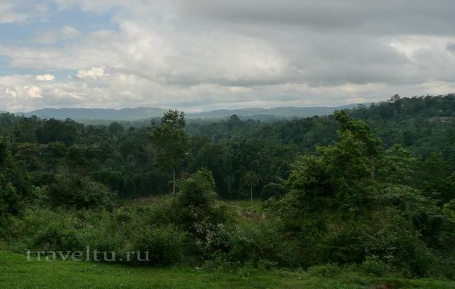 Шри-Ланка. Лес за храмом