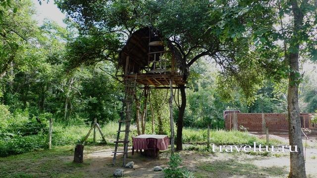 Шри-Ланка. Отзыв туристов. Домик на дереве