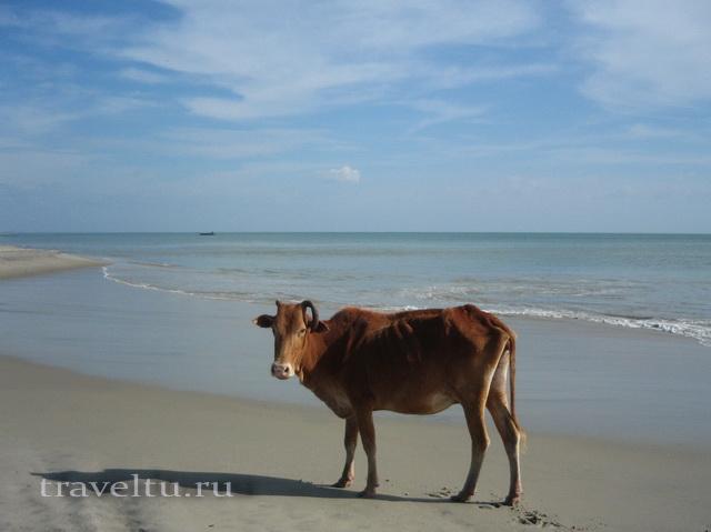 Шри-Ланка.Отзыв туристов. Пляж
