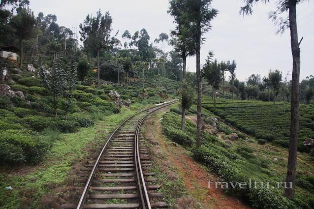 Шри-Ланка. Наши впечатления. Отзыв туристов (продолжение) рельсы