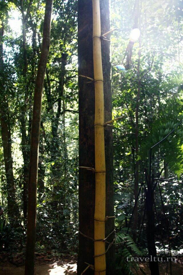 Загадки природы Шри-Ланки