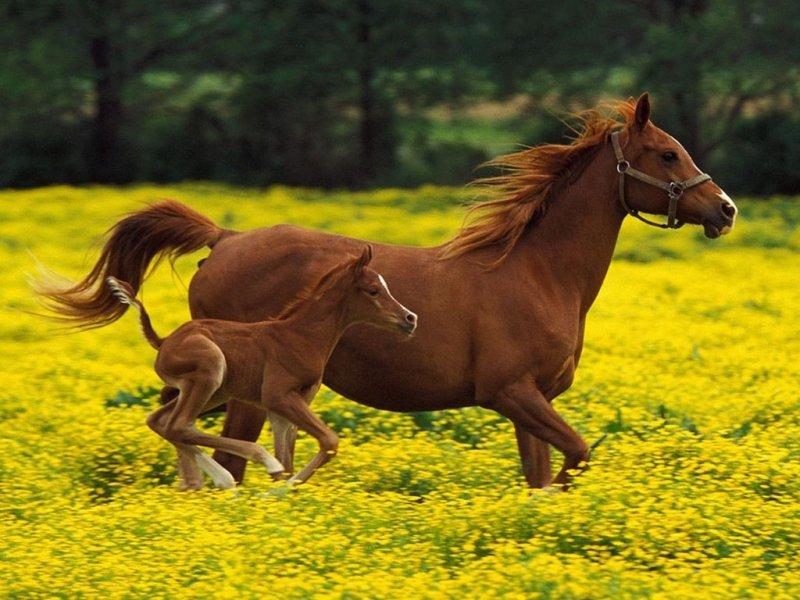 Загадки природы Шри-Ланки. Лошадь