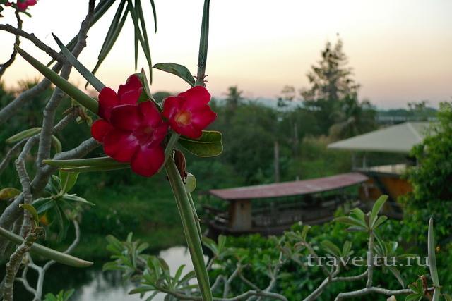 Цветы и вид на реку