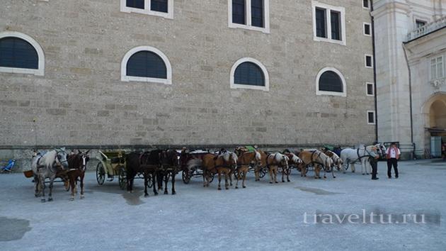 Лошади на площади