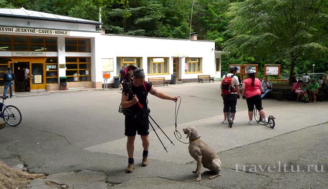 Собака на экскурсии