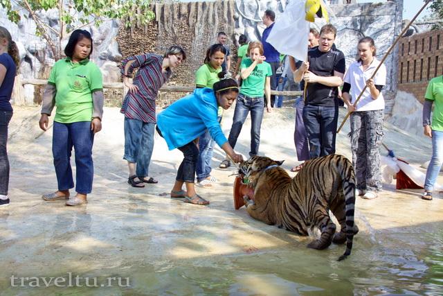 Храм тигров в Таиланде. Провинция Канчанабури. Игры с тиграми 2