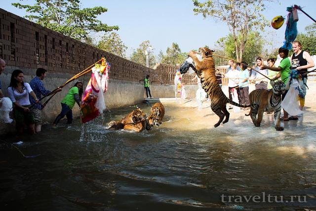 Храм тигров в Таиланде. Провинция Канчанабури. Игры с тиграми