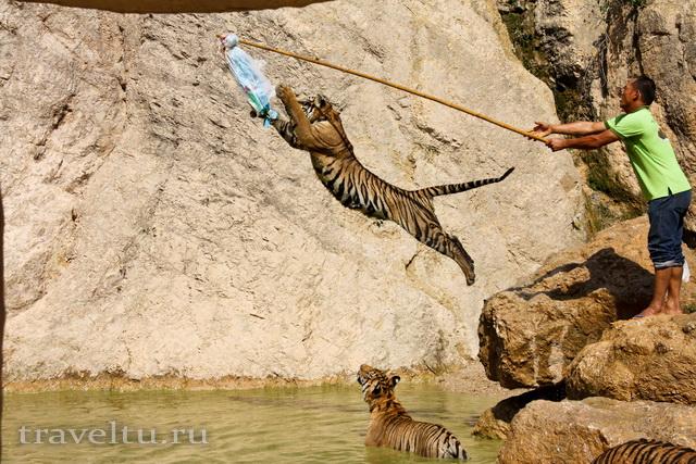 Храм тигров в Таиланде. Провинция Канчанабури. Прыжок тигра