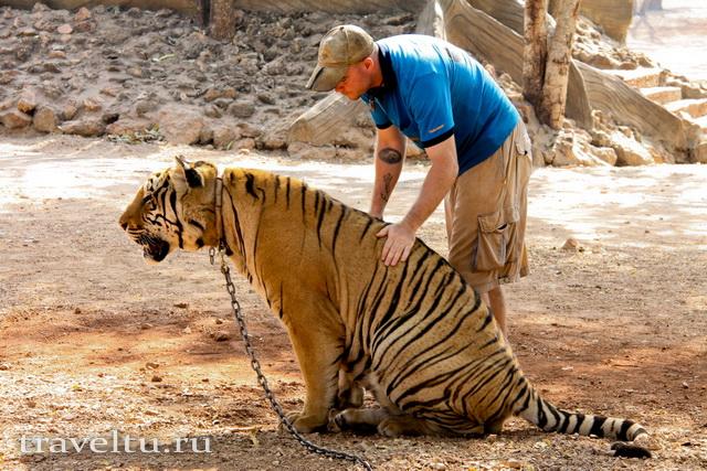 Тигриный храм в Таиланде. Провинция Канчанабури