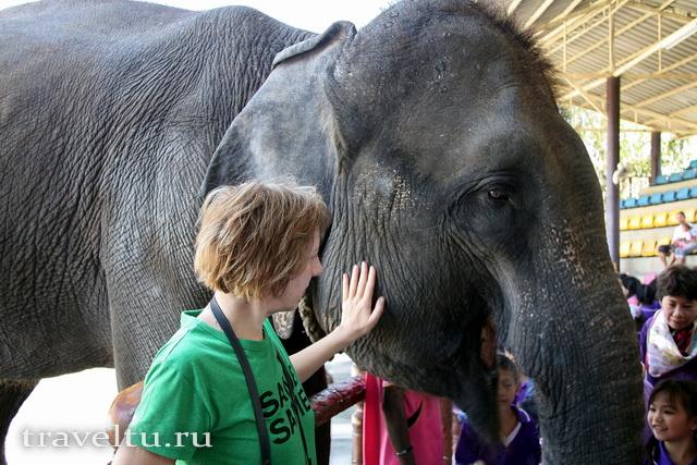 Сафар-парк Канчанабури. Шоу слонов