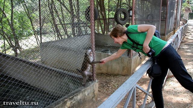 Сафари-парк в Канчанабури. Кормление обезьян