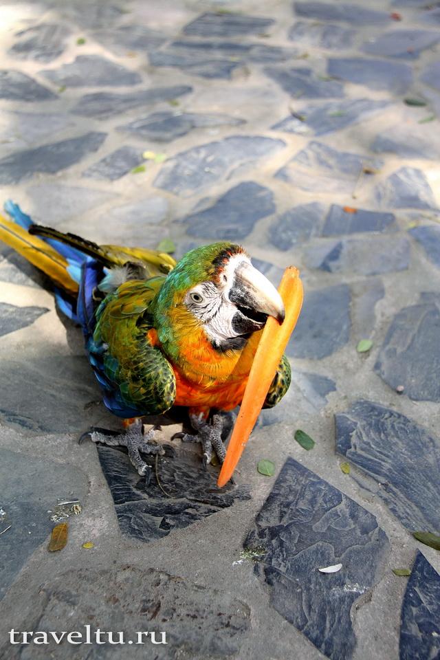 Сафари-парк в Канчанабури. Попугай ара