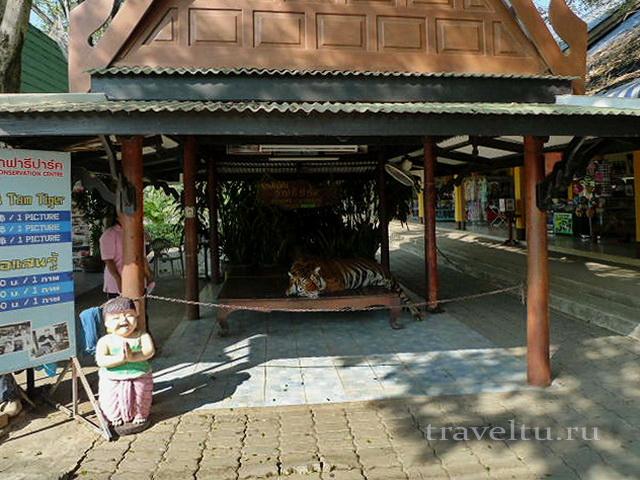 Сафари-парк в Канчанабури. Тигр на кассе
