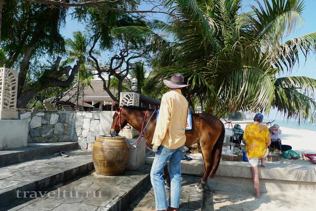 Курорты Тайланда. Ча-Ам развлечения лошадь