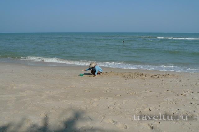Курорты Тайланда. Ча-Ам сборщица улиток