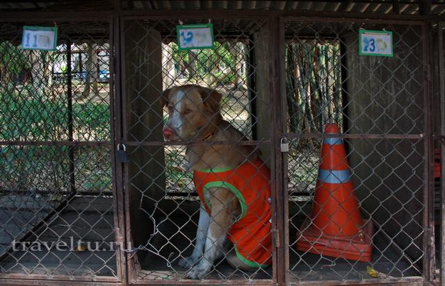 Водопад Эраван. Таиланд. Собака