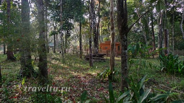 Домики отеля в джунглях