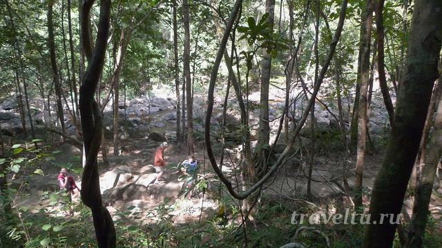 Тропинка к водопаду через лес