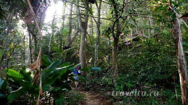 Тропинка в парке Tree Top Adventure