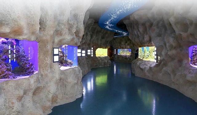 Экспозиция аквариума