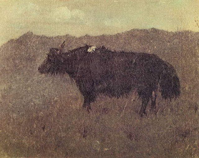 Сикким. Як. 1874–1876 гг.