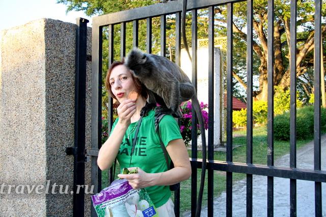 Алла кормит серебристых обезьянок