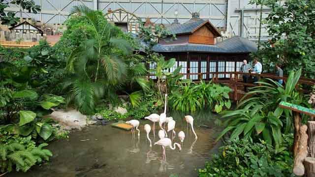 По парку гуляют фламинго