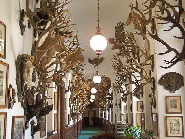 Коллекция охотничьих трофеев
