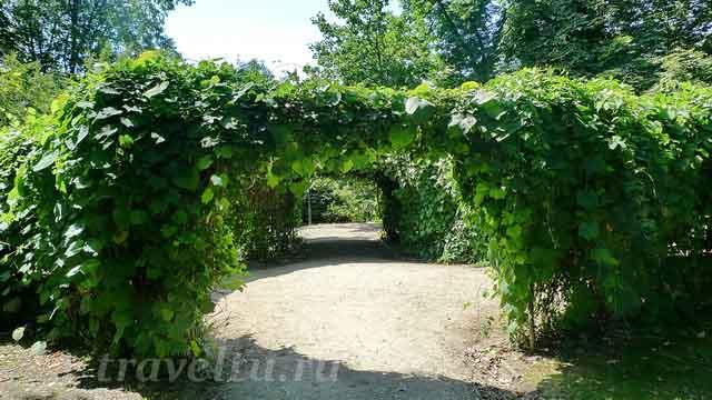 Зелёная арка в парке