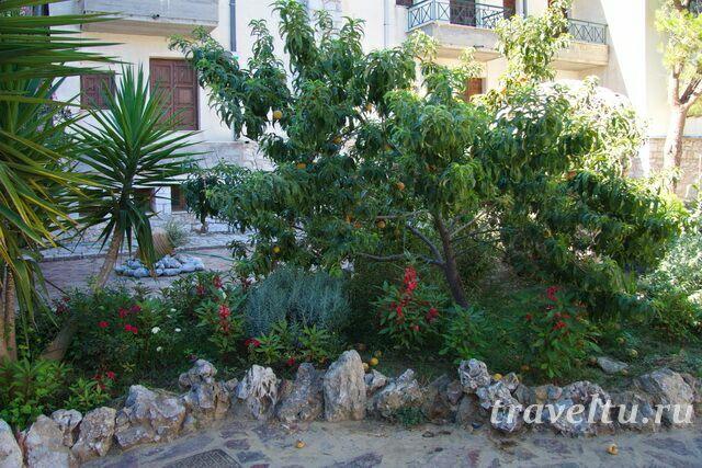 Дерево в саду отеля