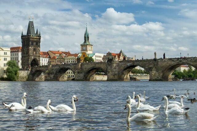 Лебеди на фоне моста