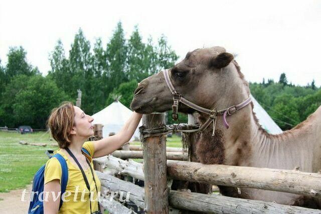 Алла с верблюдом