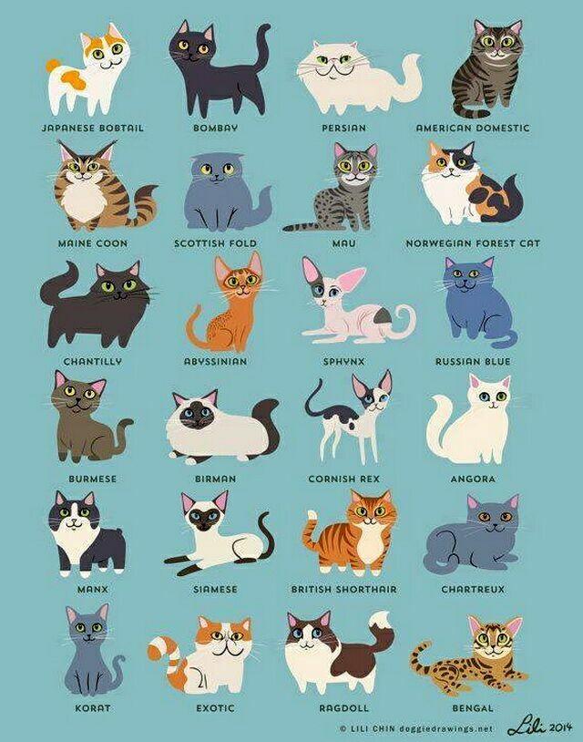 Классификация кошек
