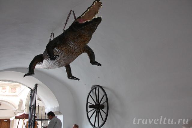 Крокодил Брно