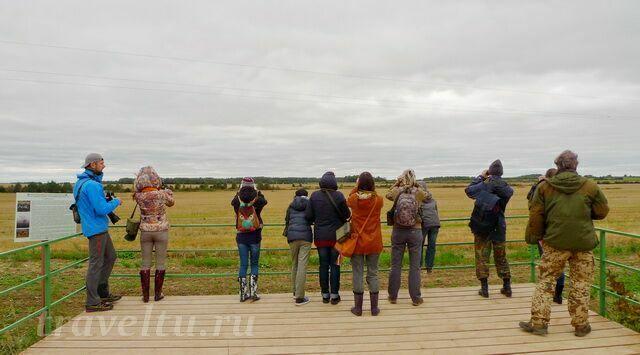 Площадка для наблюдений за серыми журавлями